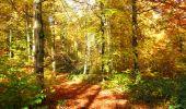 Randonnée Marche LONGPONT - en foret de Retz_ 41_Longpont_Vertes Feuilles_AR - Photo 99
