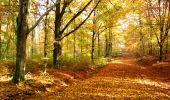 Randonnée Marche LONGPONT - en foret de Retz_ 41_Longpont_Vertes Feuilles_AR - Photo 45