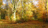 Randonnée Marche LONGPONT - en foret de Retz_ 41_Longpont_Vertes Feuilles_AR - Photo 7