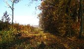 Randonnée Marche LONGPONT - en foret de Retz_ 41_Longpont_Vertes Feuilles_AR - Photo 248