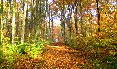 Randonnée Marche LONGPONT - en foret de Retz_ 41_Longpont_Vertes Feuilles_AR - Photo 12