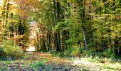 Randonnée Marche LONGPONT - en foret de Retz_ 41_Longpont_Vertes Feuilles_AR - Photo 109
