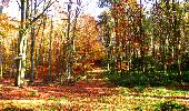 Randonnée Marche LONGPONT - en foret de Retz_ 41_Longpont_Vertes Feuilles_AR - Photo 165