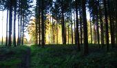 Randonnée Marche LONGPONT - en foret de Retz_ 41_Longpont_Vertes Feuilles_AR - Photo 250