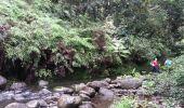 Trail Walk Unknown - Rivire Bras David - Photo 12