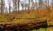 Trail Walk VILLERS-COTTERETS - en forêt de Retz_43_la laie des Pots_1 - Photo 133