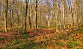 Trail Walk VILLERS-COTTERETS - en forêt de Retz_43_la laie des Pots_1 - Photo 90