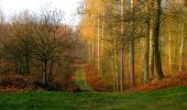 Trail Walk VILLERS-COTTERETS - en forêt de Retz_43_la laie des Pots_1 - Photo 14
