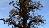Randonnée Marche Fosses-la-Ville - RF-Na-06-Bambois_Grande-boucle - Photo 1