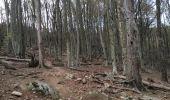 Trail Walk ARGELES-SUR-MER - Tour de la Massane-Cabane des Colomates - Photo 5