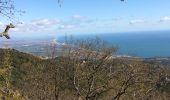 Trail Walk ARGELES-SUR-MER - Tour de la Massane-Cabane des Colomates - Photo 3