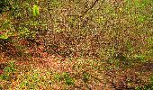 Trail Walk LONGPONT - en forêt de Retz_45_Longpont_la Pierre Fortiere_AR - Photo 157