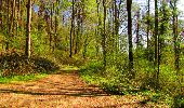 Trail Walk LONGPONT - en forêt de Retz_45_Longpont_la Pierre Fortiere_AR - Photo 165