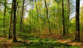 Trail Walk LONGPONT - en forêt de Retz_45_Longpont_la Pierre Fortiere_AR - Photo 36