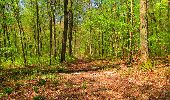 Trail Walk LONGPONT - en forêt de Retz_45_Longpont_la Pierre Fortiere_AR - Photo 161