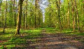 Trail Walk LONGPONT - en forêt de Retz_45_Longpont_la Pierre Fortiere_AR - Photo 32