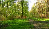 Trail Walk LONGPONT - en forêt de Retz_45_Longpont_la Pierre Fortiere_AR - Photo 42