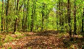 Trail Walk LONGPONT - en forêt de Retz_45_Longpont_la Pierre Fortiere_AR - Photo 171
