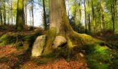 Trail Walk LONGPONT - en forêt de Retz_45_Longpont_la Pierre Fortiere_AR - Photo 75