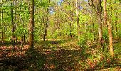 Trail Walk LONGPONT - en forêt de Retz_45_Longpont_la Pierre Fortiere_AR - Photo 169