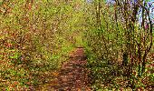 Trail Walk LONGPONT - en forêt de Retz_45_Longpont_la Pierre Fortiere_AR - Photo 155