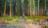 Trail Walk LONGPONT - en forêt de Retz_45_Longpont_la Pierre Fortiere_AR - Photo 9