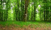 Randonnée Marche LONGPONT - en foret de Retz_46_Longpont_Largny sur Automne_AR - Photo 8