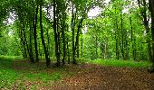 Randonnée Marche LONGPONT - en foret de Retz_46_Longpont_Largny sur Automne_AR - Photo 9