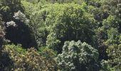 Randonnée Marche LAROQUE-DES-ALBERES - 66 LAROQUE DES ALBERES, (maison) les Mas, piste DFCI AL12, les Paraguères, Casot del Guarda, font de la Vernosa, chapelle St fructueux de Roca Vella, Itin.9 R - Photo 10