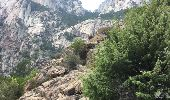 Trail Walk QUENZA - cascade purcaraccia - Photo 3