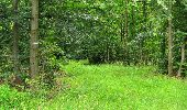Randonnée Marche PIERREFONDS - en forêt de Compiègne_1_étang de St-Périne_la Michelette - Photo 138