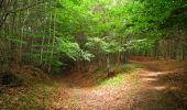 Randonnée Marche PIERREFONDS - en forêt de Compiègne_1_étang de St-Périne_la Michelette - Photo 145