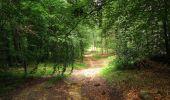 Randonnée Marche PIERREFONDS - en forêt de Compiègne_1_étang de St-Périne_la Michelette - Photo 98