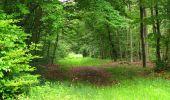 Randonnée Marche PIERREFONDS - en forêt de Compiègne_1_étang de St-Périne_la Michelette - Photo 137