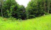 Randonnée Marche PIERREFONDS - en forêt de Compiègne_1_étang de St-Périne_la Michelette - Photo 142