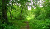 Randonnée Marche PIERREFONDS - en forêt de Compiègne_1_étang de St-Périne_la Michelette - Photo 44