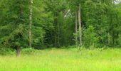 Randonnée Marche PIERREFONDS - en forêt de Compiègne_1_étang de St-Périne_la Michelette - Photo 58