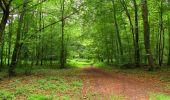 Randonnée Marche PIERREFONDS - en forêt de Compiègne_1_étang de St-Périne_la Michelette - Photo 130