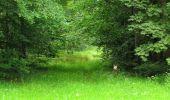 Randonnée Marche PIERREFONDS - en forêt de Compiègne_1_étang de St-Périne_la Michelette - Photo 73