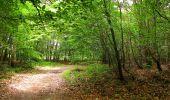 Randonnée Marche PIERREFONDS - en forêt de Compiègne_1_étang de St-Périne_la Michelette - Photo 146