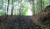 Randonnée Marche PIERREFONDS - en forêt de Compiègne_1_étang de St-Périne_la Michelette - Photo 109