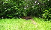 Randonnée Marche PIERREFONDS - en forêt de Compiègne_1_étang de St-Périne_la Michelette - Photo 136