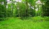 Randonnée Marche PIERREFONDS - en forêt de Compiègne_1_étang de St-Périne_la Michelette - Photo 49