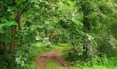 Randonnée Marche PIERREFONDS - en forêt de Compiègne_1_étang de St-Périne_la Michelette - Photo 88