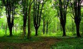 Trail Walk LONGPONT - en foret de Retz_48_les bois des Prêtres et du Mausolée - Photo 13