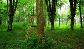 Trail Walk LONGPONT - en foret de Retz_48_les bois des Prêtres et du Mausolée - Photo 15
