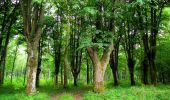 Trail Walk LONGPONT - en foret de Retz_48_les bois des Prêtres et du Mausolée - Photo 16