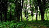 Trail Walk LONGPONT - en foret de Retz_48_les bois des Prêtres et du Mausolée - Photo 17