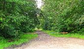 Randonnée Marche SAINT-JEAN-AUX-BOIS - en forêt de Compiègne_2_ruines gallo-romaines de Champlieu_les Petits Monts - Photo 212