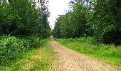 Randonnée Marche SAINT-JEAN-AUX-BOIS - en forêt de Compiègne_2_ruines gallo-romaines de Champlieu_les Petits Monts - Photo 176